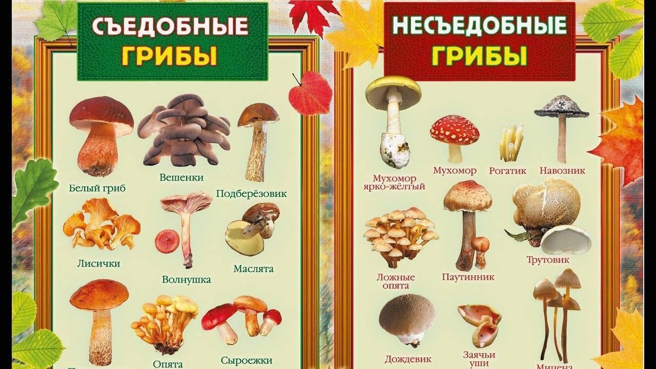 С какого возраста можно давать ребенку грибы? - spuzom.com