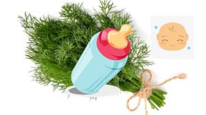 Укропная водичка для новорожденных: инструкция по применению, а также для чего нужна, заваривают ли из семян в домашних условиях, как сделать и давать в каплях?