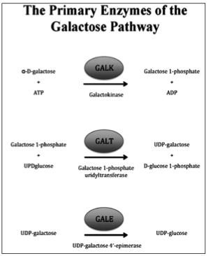 Галактоземия у новорожденных — что это такое, симптомы