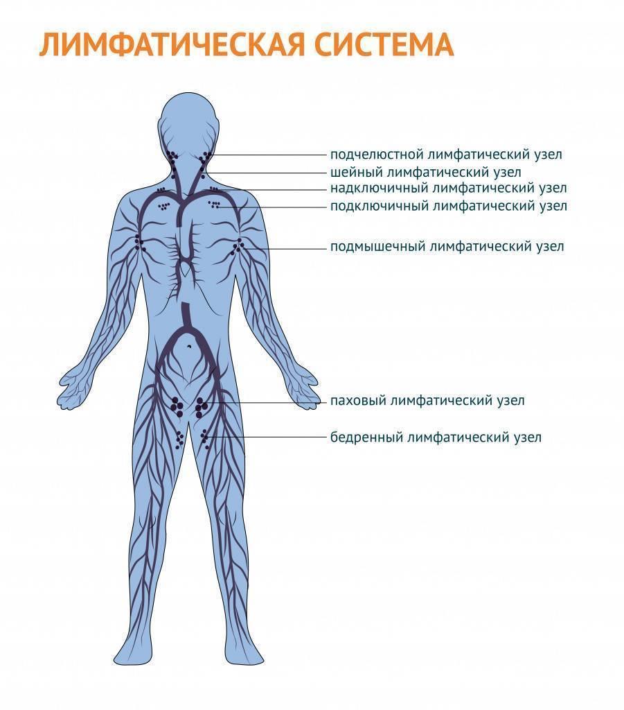Воспаление лимфоузлов на шее у ребенка: симптомы, что делать
