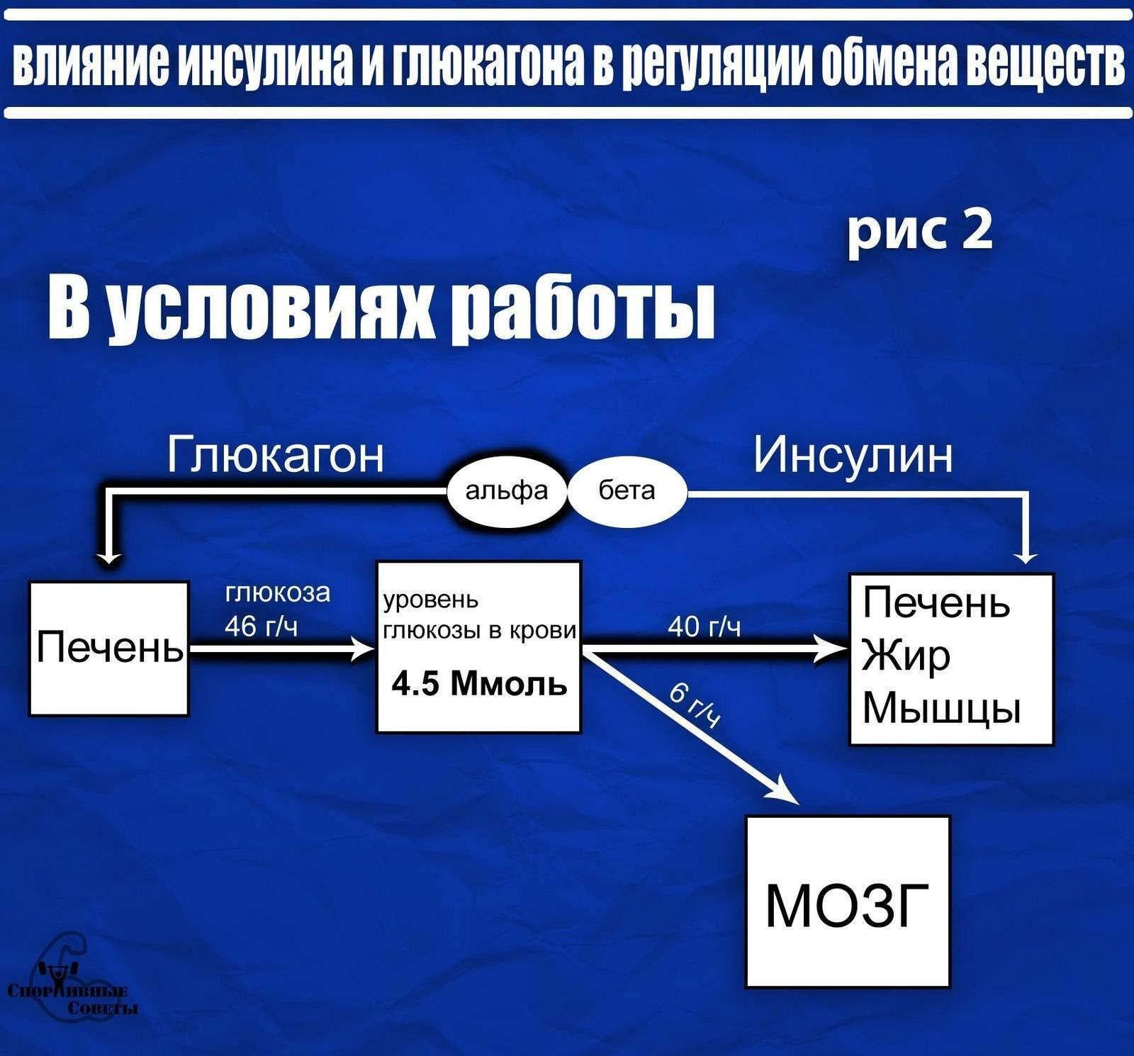Обязателен ли анализ крови на сахар в 1 год? - кровь на сахар в годик - запись пользователя ирина (ya-dikarka) в сообществе детские болезни от года до трех в категории анализы, узи, рентген - babyblog.ru