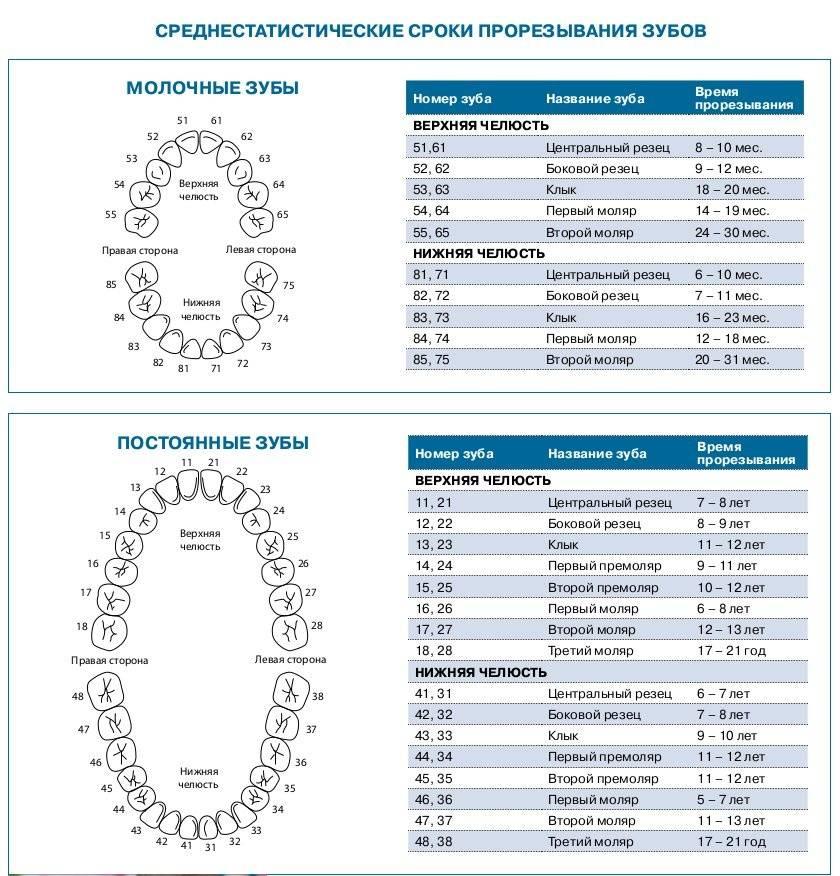 Последовательность прорезывания зубов у детей: схема и сроки