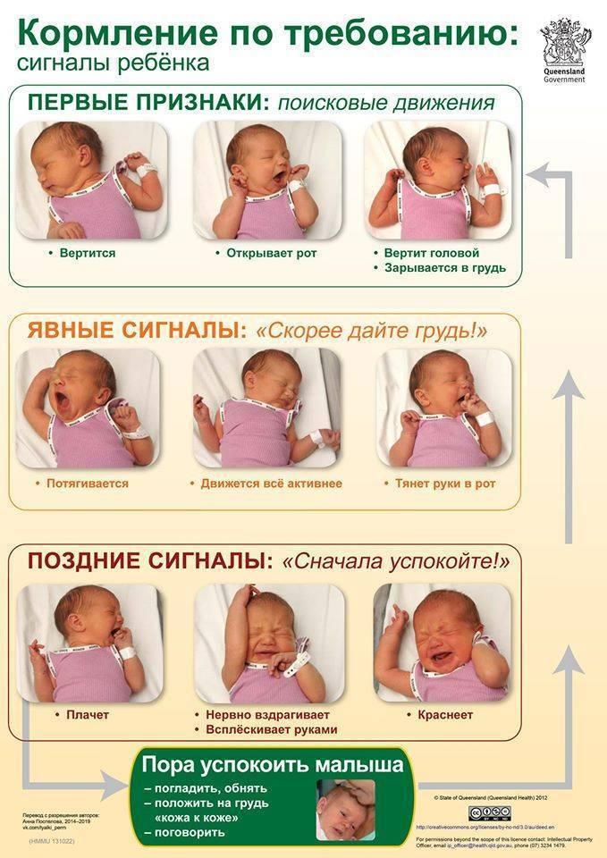 Нормы веса новорожденных по нормам воз у мальчиков и девочек