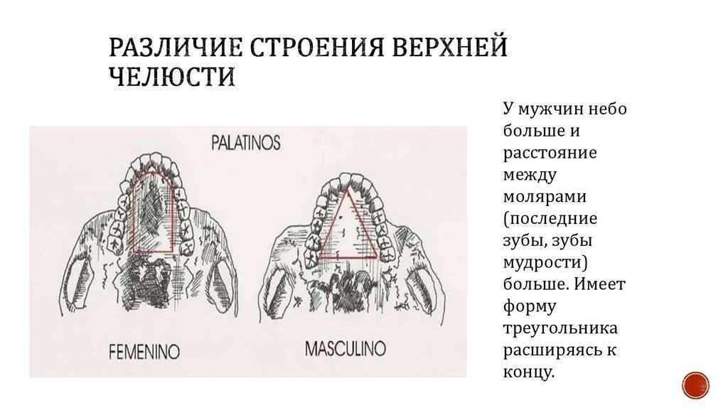 Сколько костей у человека, и как меняется скелет с возрастом?