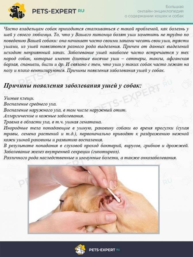 Причины кровотечения из уха у ребёнка