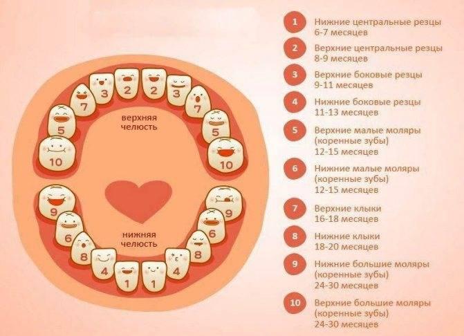 Во сколько месяцев начинаются резаться первые зубки у младенцев