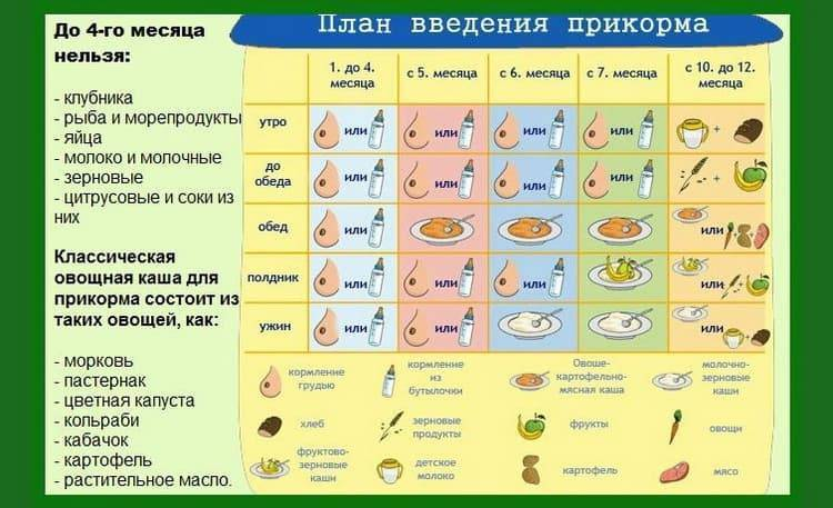 Сколько раз в день нужно кормить ребенка кашей, овощным и фруктовым пюре?