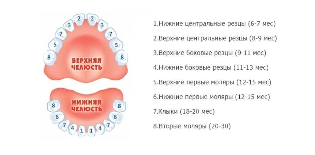 Верхние зубы у грудничков как долго прорезываются
