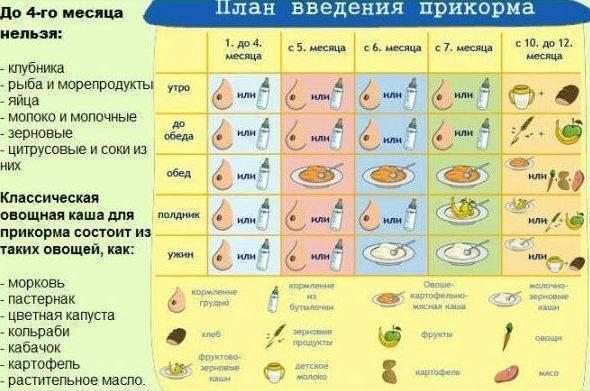 Как давать ребенку желток, со скольки месяцев и сколько раз в неделю его можно есть и как вводить в прикорм