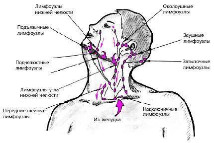 Лимфоузлы на затылке у ребенка (18 фото): увеличены затылочные лимфоузлы - причины и лечение