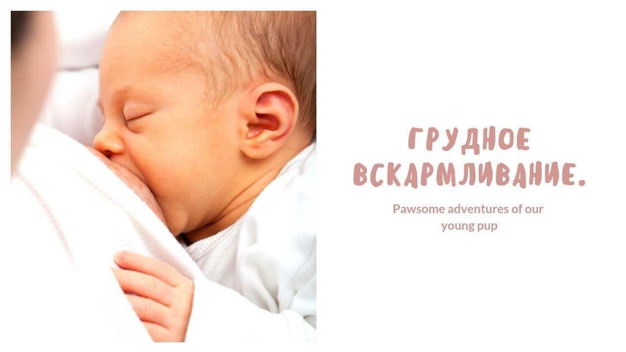 Как правильно кормить новорожденного грудным молоком? сколько раз и сколько времни кормить? как лучше прикладывать к груди и какую позицию выбрать?