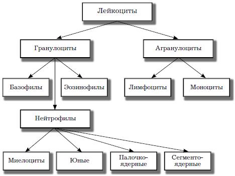 О чем говорят повышены моноциты в крови у взрослого (моноцитоз)