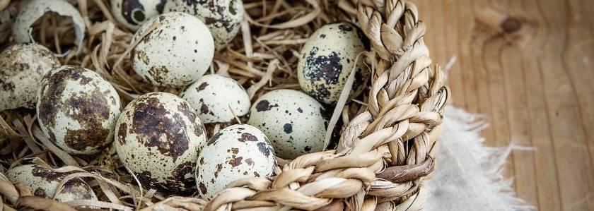 Как долго нужно варить перепелиные яйца детям