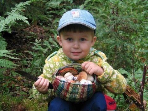 Можно ли давать детям грибы и с какого возраста (шампиньоны и пр) + комаровский