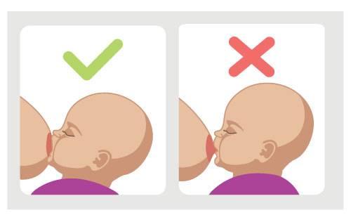 Правильное вскармливание грудного ребенка: советы кормящей маме