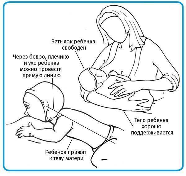 Как правильно кормить грудничка грудным молоком, позы для кормления