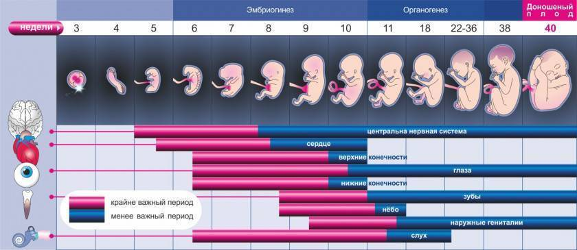 Нормы развития ребенка от плода в животе до года новорожденного