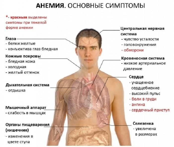 Железодефицитная анемия. причины, симптомы, диагностика и лечение патологии :: polismed.com