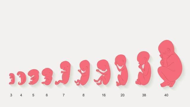 Как меняется ребенок за месяц: подробный календарь развития новорожденного по неделям