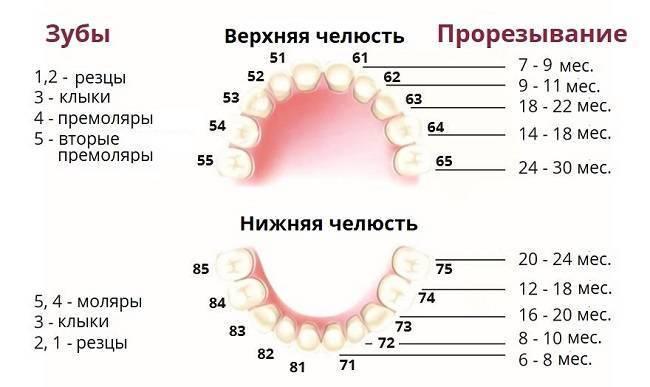 Прорезывание зубов у детей: симптомы, когда начинается (во сколько месяцев), порядок роста