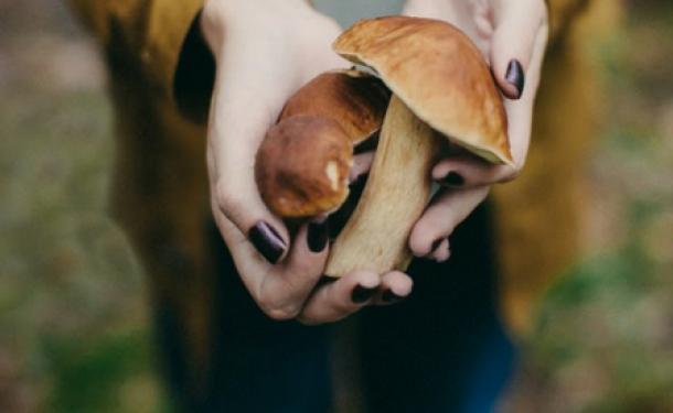 Чайный гриб для детей: с какого возраста можно пить и как именно его давать ребенку