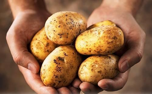 Когда можно давать картофельное пюре??