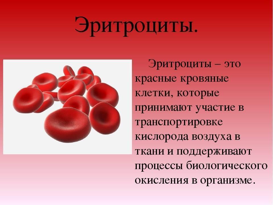 Что делать при повышенных моноцитах в крови у ребенка