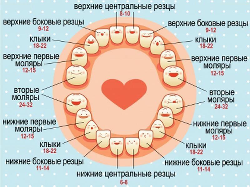 Когда и как режутся первые молочные зубы