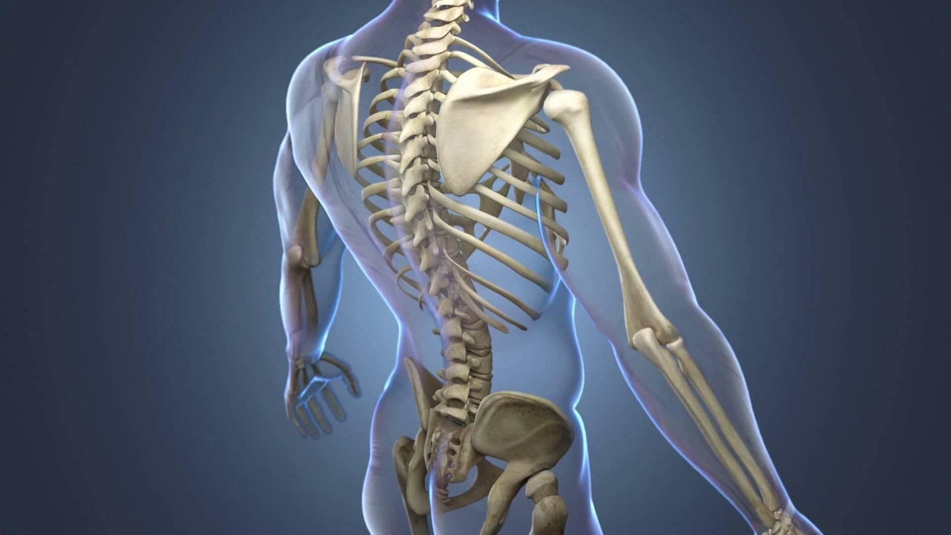 Каких костей нет у младенца. костный скелет новорожденного ребенка