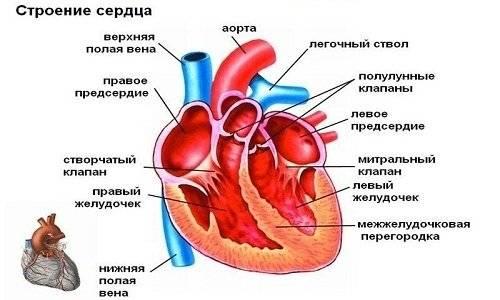 Шумы в сердце у ребенка: причины, симптомы, что означают