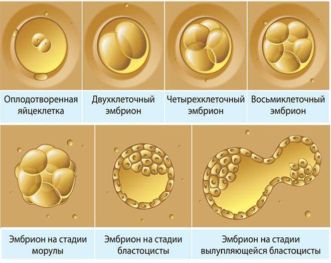 Наконец нашла информативные таблички о развитии плода. пользуйтесь девочки ;)