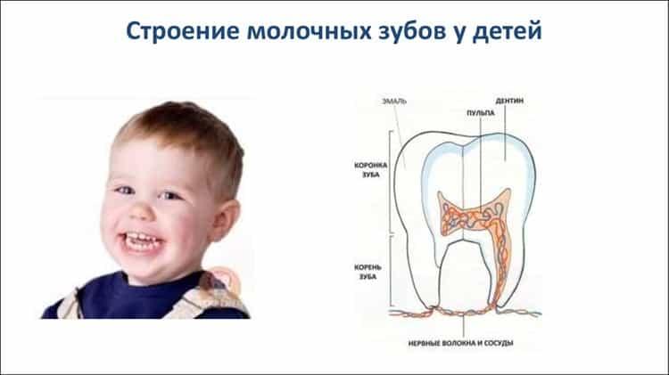 Комаровский - зубы: прорезывание, понос при прорезывании у детей, серебрение зубов, симптомы первых зубов