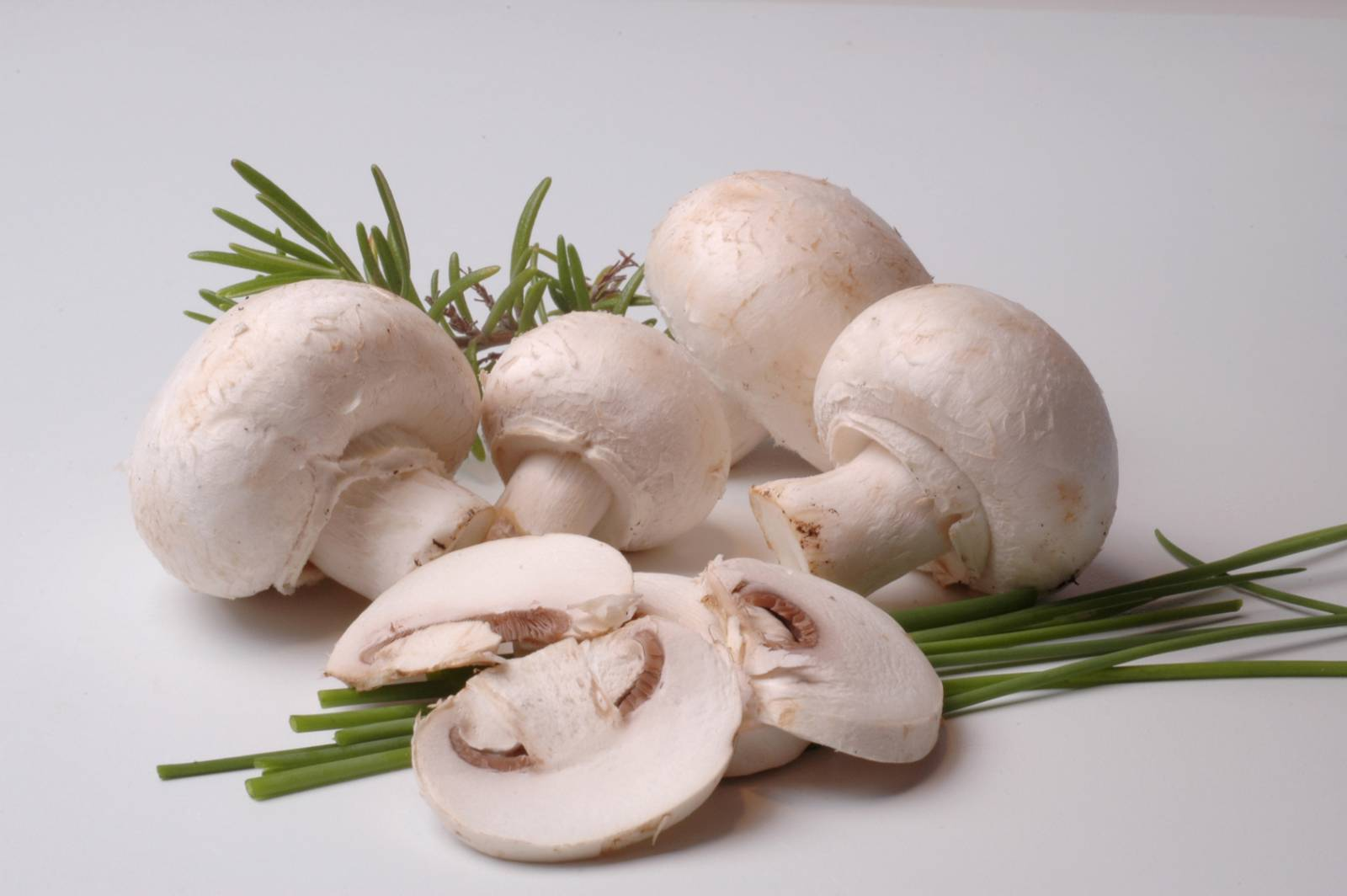 Можно ли давать малышам грибы? грибы в питании ребенка, витамины в грибах
