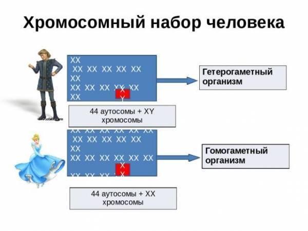 От чего зависит пол ребенка: мифы и реальность / mama66.ru