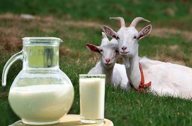Козье молоко в 2 месяца...можно или нет?