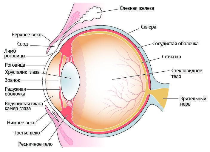 У ребенка болит глаз, основные причины и что делать
