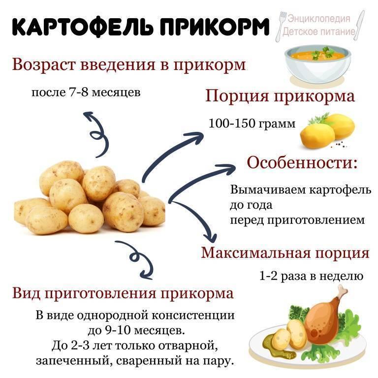 Когда можно давать картофельное пюре?? - когда можно давать картофельное пюре грудничку - запись пользователя кинская (kinskaja) в сообществе питание новорожденного в категории правильное введение прикорма - babyblog.ru