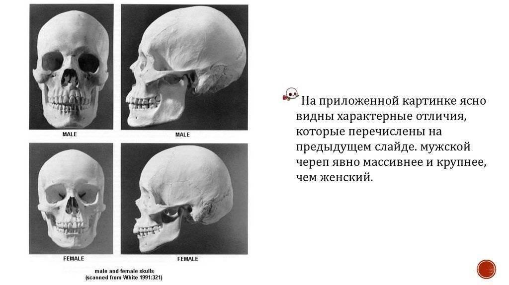 Сколько костей в теле младенца, почему их больше чем у взрослого