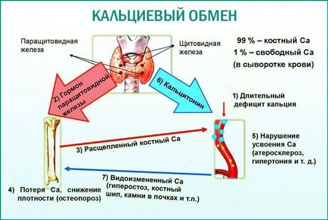 Анализ мочи по сулковичу: показания, норма, расшифровка