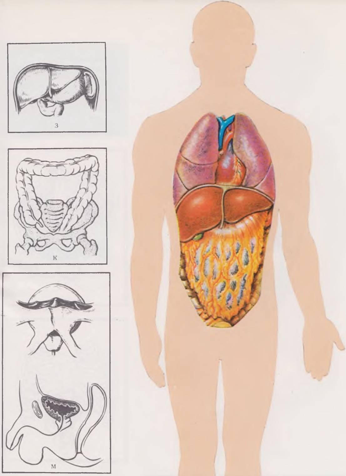 Особенности развития костной системы у детей
