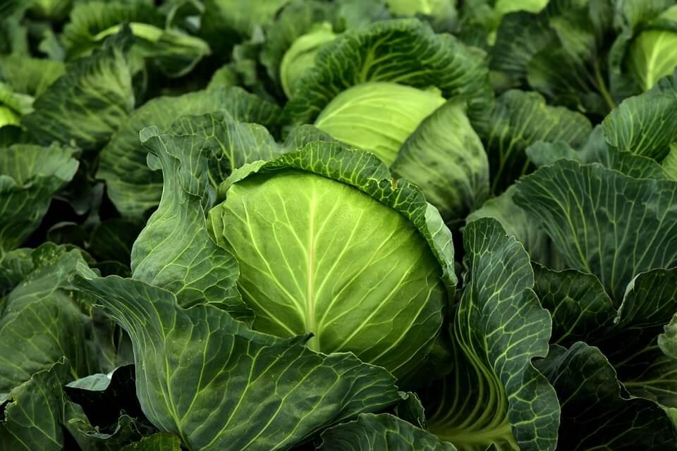 Капуста ребенку: с какого возраста можно давать есть, когда вводить разные виды овоща в рацион до года, польза и вред, а также риск аллергической реакции
