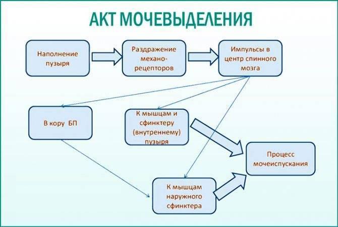 Плач перед мочеиспусканием ((( - новорожденный плачет перед мочеиспусканием - запись пользователя настя (nastyalion) в сообществе здоровье новорожденных в категории особенности мальчиков - babyblog.ru