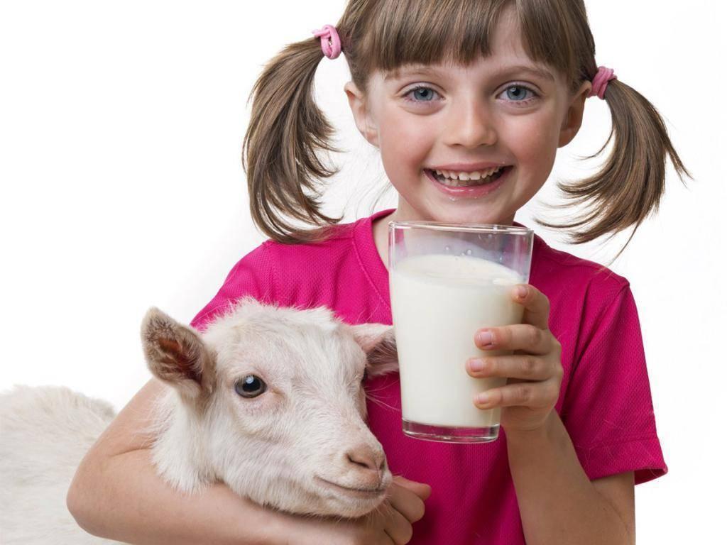 С какого возраста можно давать грудничку козье молоко