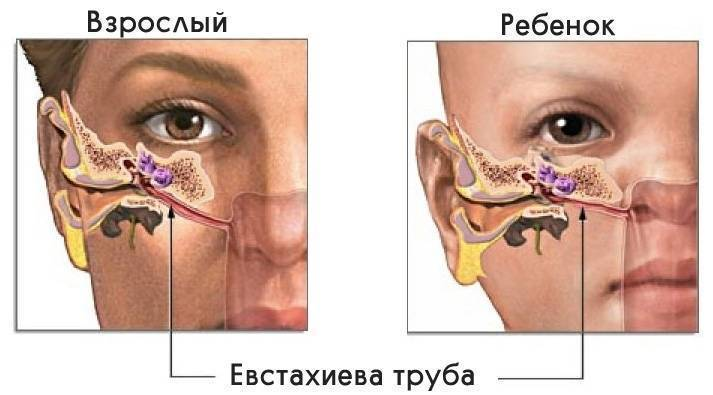 У ребенка сопли болит ухо