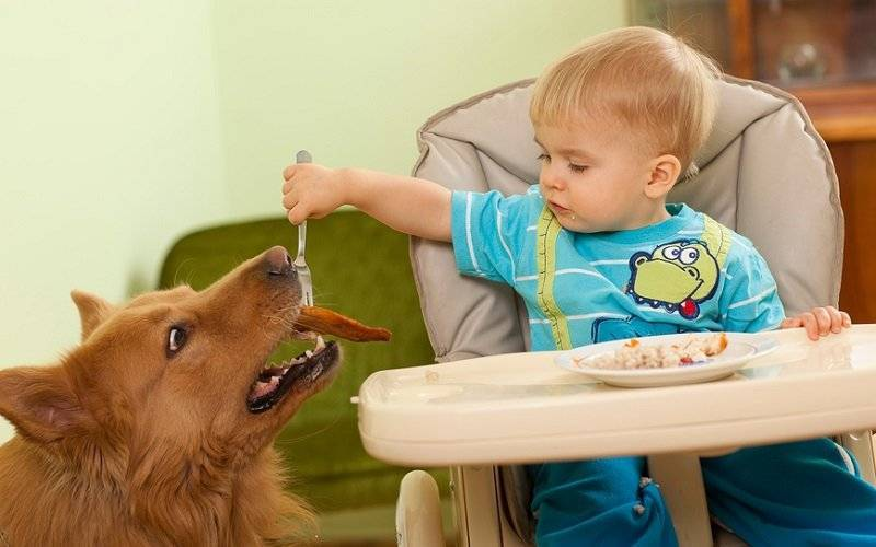 Питание ребенка от 1 года до 2 лет: 10 правил и разрешенные продукты. питание ребенка от года до двух лет
