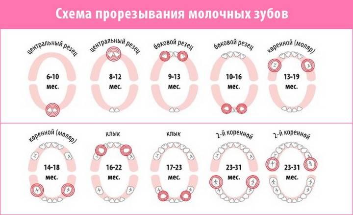Порядок роста первых зубов у младенцев