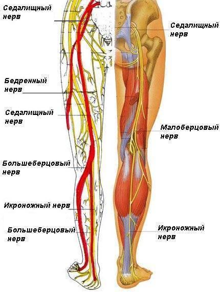 Болят ноги у ребенка во время орви