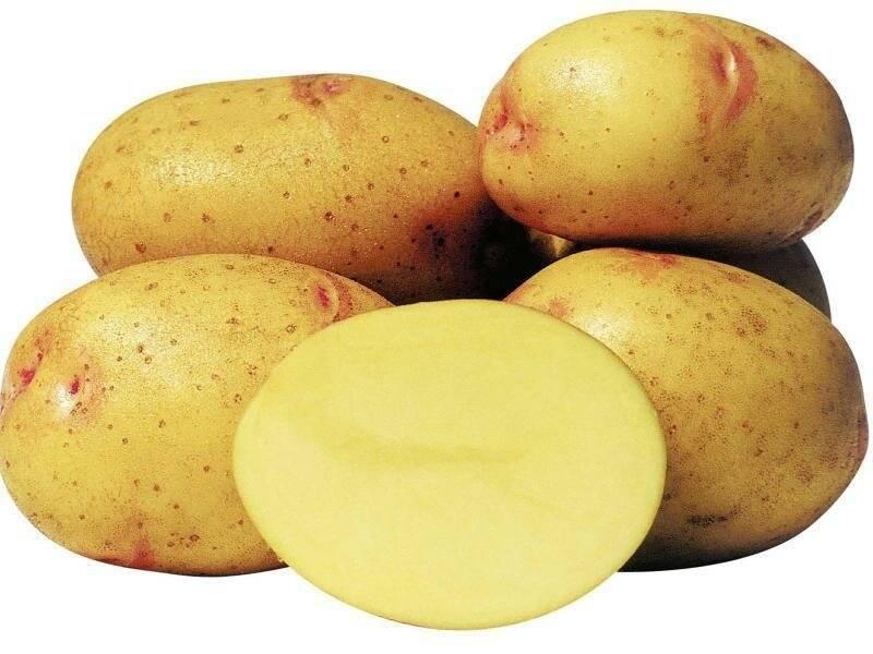 С какого возраста ребенку можно картошку (когда прикорм)