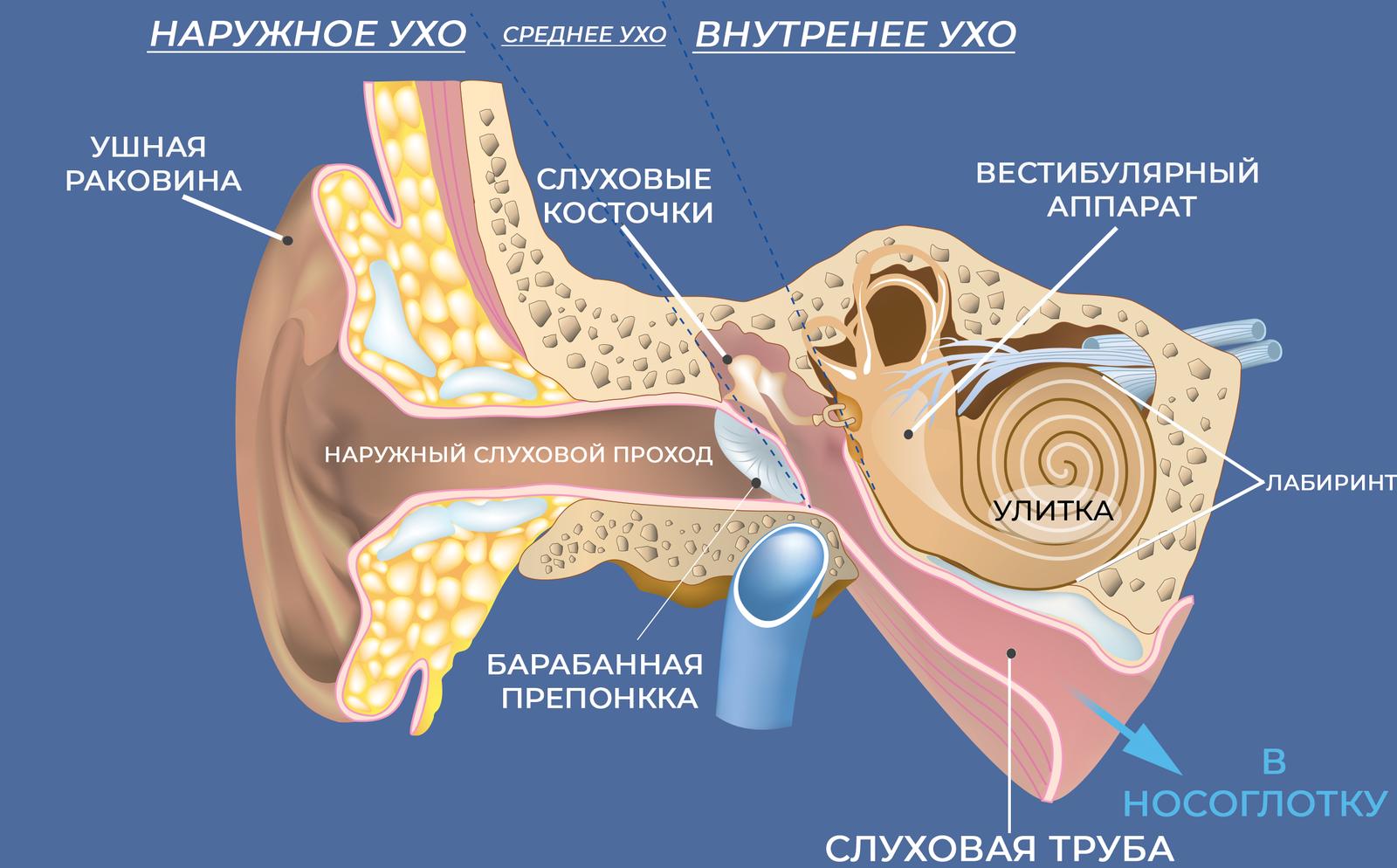 Почему при чистке может пойти кровь из уха у ребенка до года