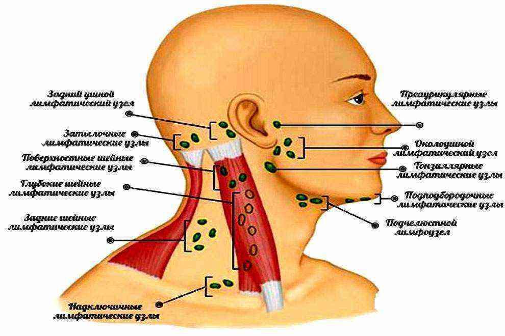 У ребёнка увеличены лимфоузлы на шее